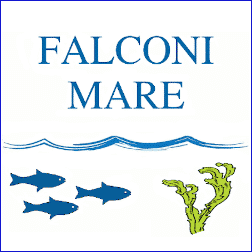 Falconi Mare logo